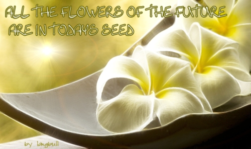 all the flowers of the future  are in todays seed ok