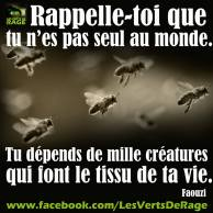 Verts de rage 4 - citation Faouzi