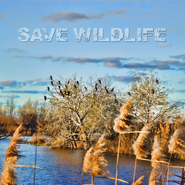 Save Wildlife by longbull