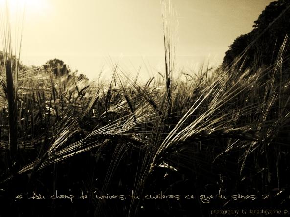 Au champ de l'Univers, tu cueilleras ce que tu sèmes ,proverbe persan & photography by longull from landcheyenne