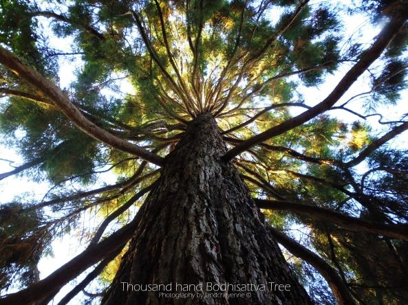Thousand hand Bodhisattva Tree - photography by landcheyenne