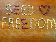 Seeds of freedom 2
