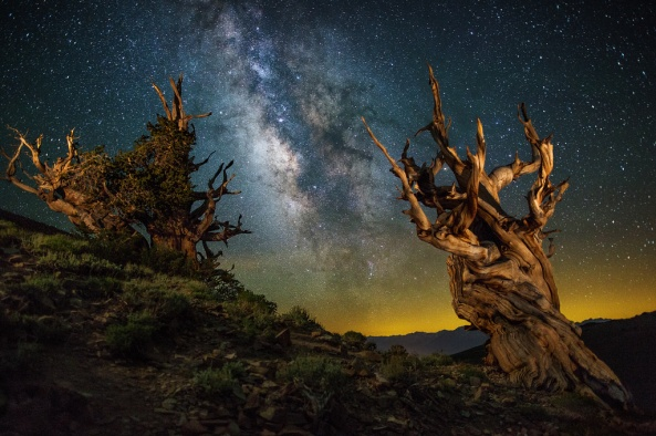 Ancient by Shane Black