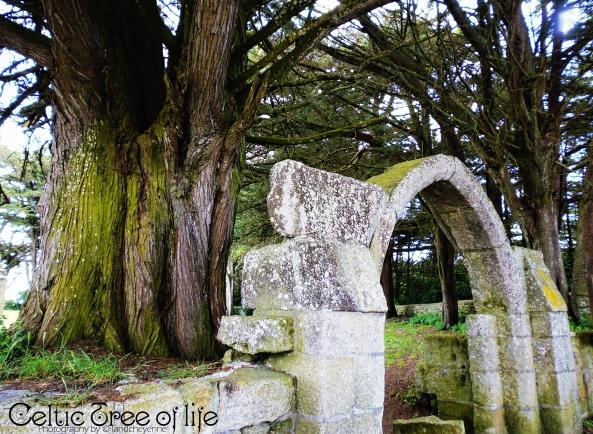 Celtic tree of life by landcheyenne
