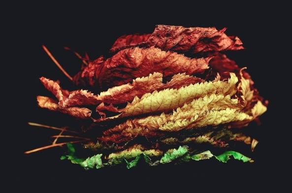 Concours d'automne