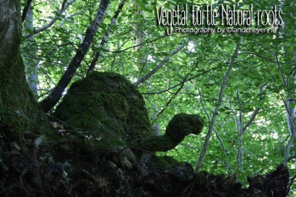 vegetal-turtle-natural-roots-photography-by-landcheyenne